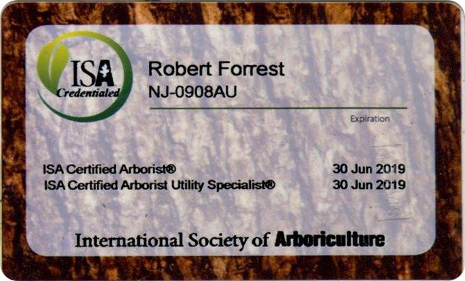 Forrest Tree Surgeon